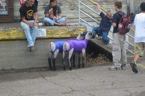 Goats in Spandex