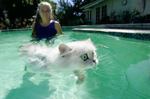 This kitty sure doesn't like water